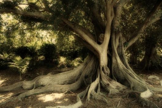 albero12 - Copia