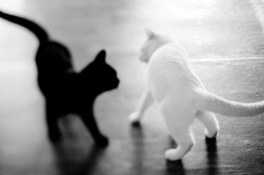 bianco nero2