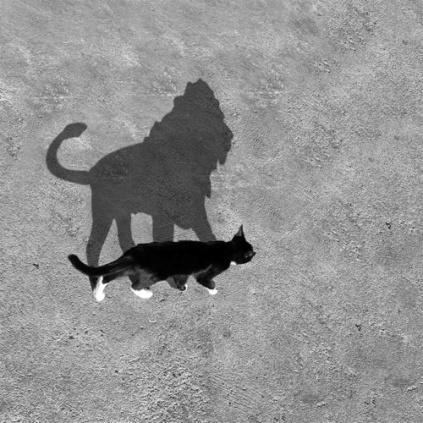 gatto leone