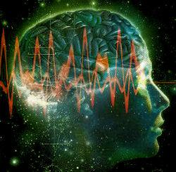 cervello18