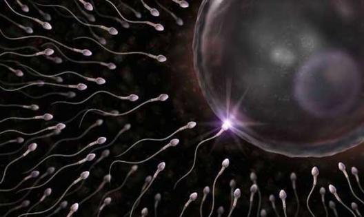 spermatozoi2.jpg