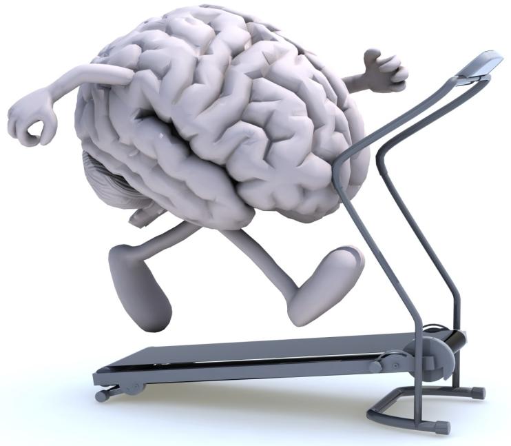 cervello48.jpg